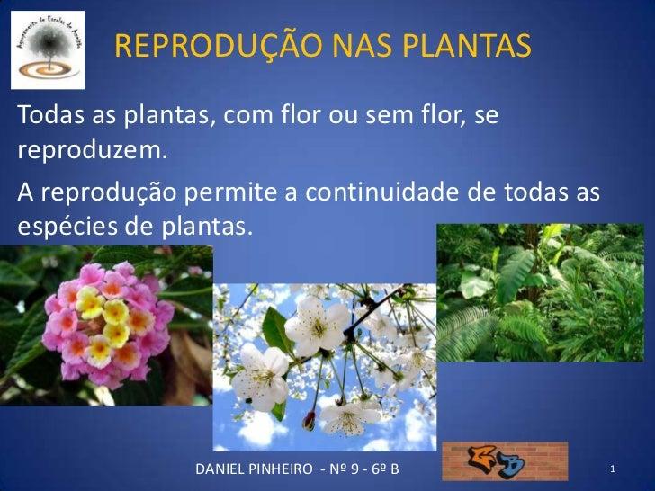 REPRODUÇÃO NAS PLANTAS Todas as plantas, com flor ou sem flor, se reproduzem. A reprodução permite a continuidade de todas...