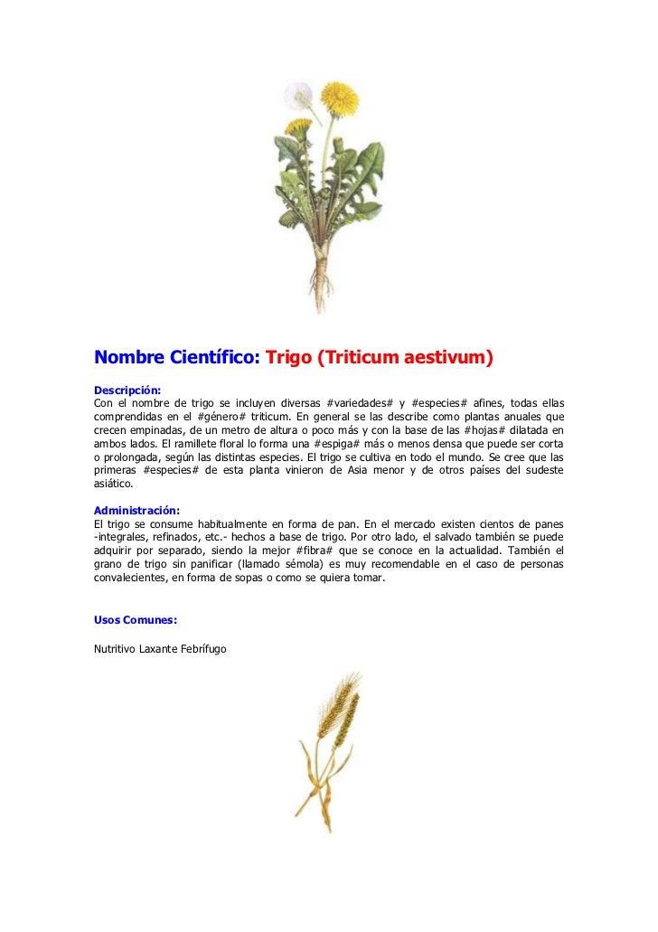 Pilgkingman blog archive tipos de plantas ornamentales for Plantas medicinales y ornamentales