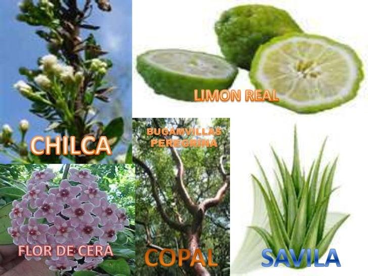 fauna y flora del ecuador