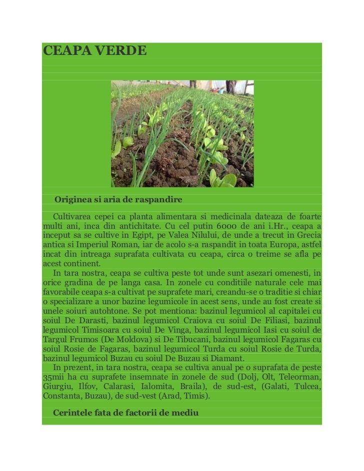 CEAPA VERDE   Originea si aria de raspandire   Cultivarea cepei ca planta alimentara si medicinala dateaza de foartemulti ...