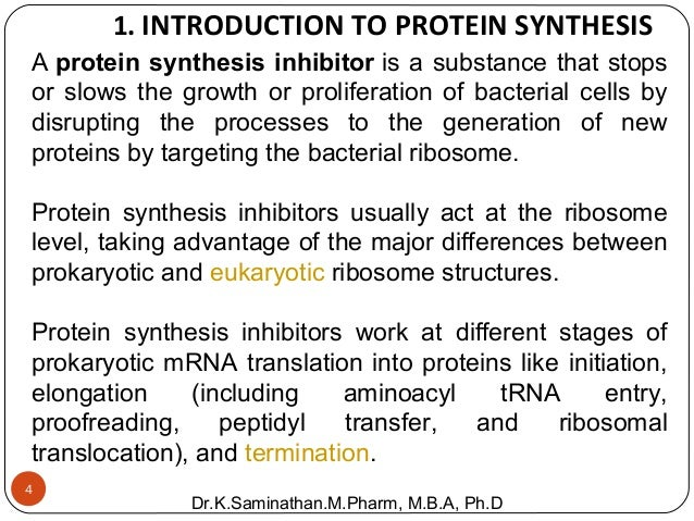 "what are the 2 stages of protein synthesis Stage 2: elongation  the other major requirement for protein synthesis is the translator molecules that physically ""read"" the mrna codons."