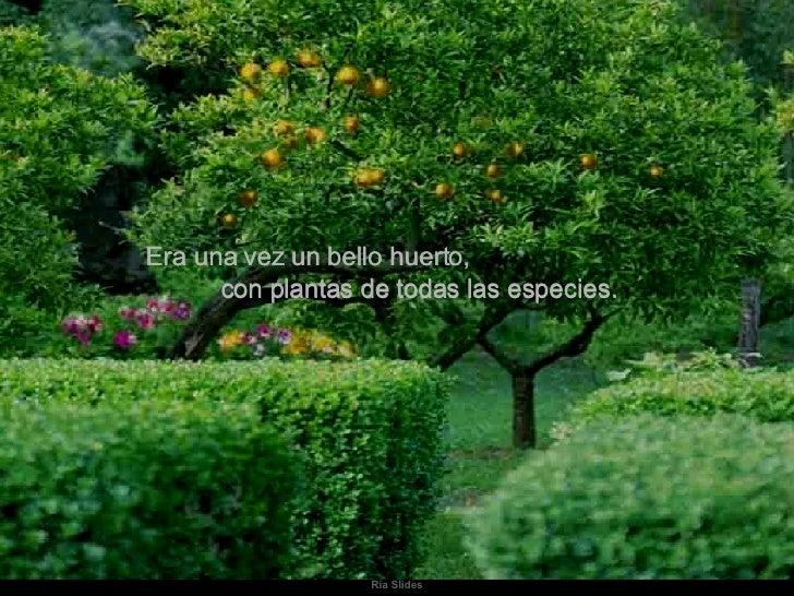 Era una vez un bello huerto,  con plantas de todas las especies.