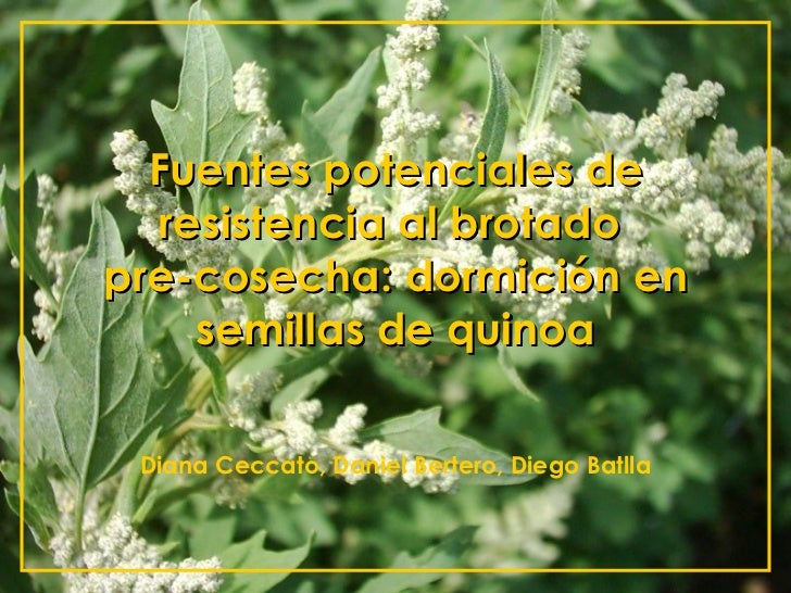 Fuentes potenciales de resistencia al brotado  pre-cosecha: dormición en semillas de quinoa Diana Ceccato, Daniel Bertero,...