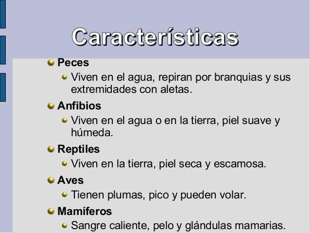 CaracterísticasCaracterísticas Peces Viven en el agua, repiran por branquias y sus extremidades con aletas. Anfibios Viven...