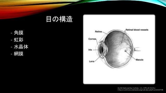 目の構造 - 角膜 - 虹彩 - 水晶体 - 網膜 By NIH National Eye Institute - [1], パブリック・ドメイン, https://commons.wikimedia.org/w/index.php?curid...
