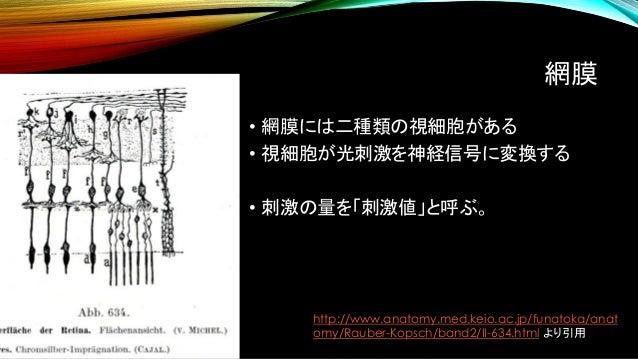 網膜 • 網膜には二種類の視細胞がある • 視細胞が光刺激を神経信号に変換する • 刺激の量を「刺激値」と呼ぶ。 http://www.anatomy.med.keio.ac.jp/funatoka/anat omy/Rauber-Kopsch...