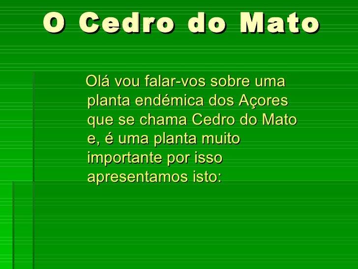 O Cedro do Mato  Olá vou falar-vos sobre uma  planta endémica dos Açores  que se chama Cedro do Mato  e, é uma planta muit...