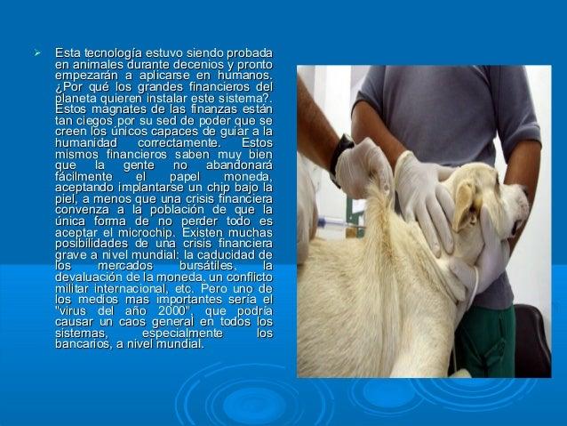  Esta tecnología estuvo siendo probadaEsta tecnología estuvo siendo probada en animales durante decenios y prontoen anima...