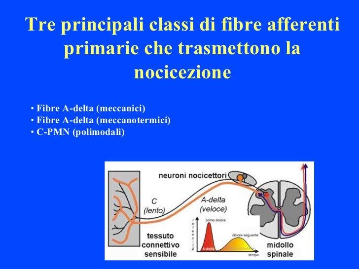 Tre principali classi di fibre afferenti    primarie che trasmettono la            nocicezione• Fibre A-delta (meccanici)•...