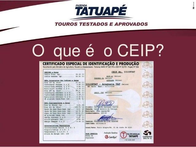 O que é o CEIP?