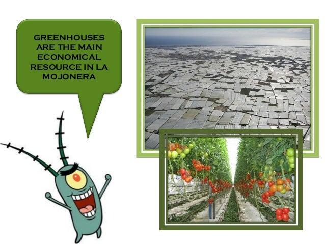 GREENHOUSES ARE THE MAIN ECONOMICAL RESOURCE IN LA MOJONERA