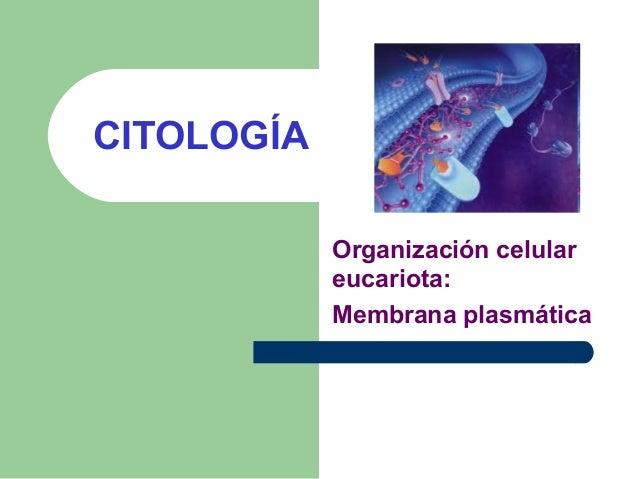 CITOLOGÍA Organización celular eucariota: Membrana plasmática