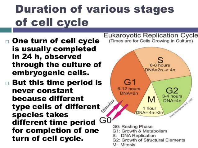 stages of cell cycle pdf