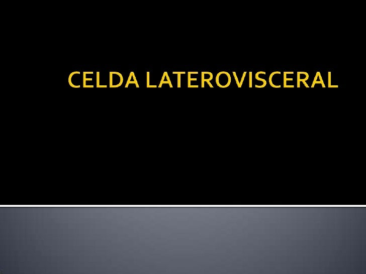 CELDA LATEROVISCERAL<br />