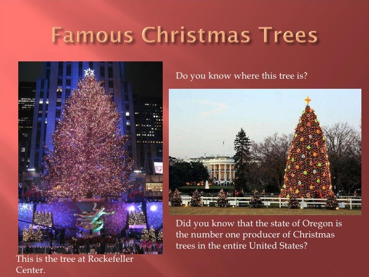 Where Did The Christmas Tree Originated From