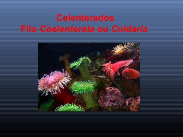 Celenterados Filo Coelenterata ou Cnidaria
