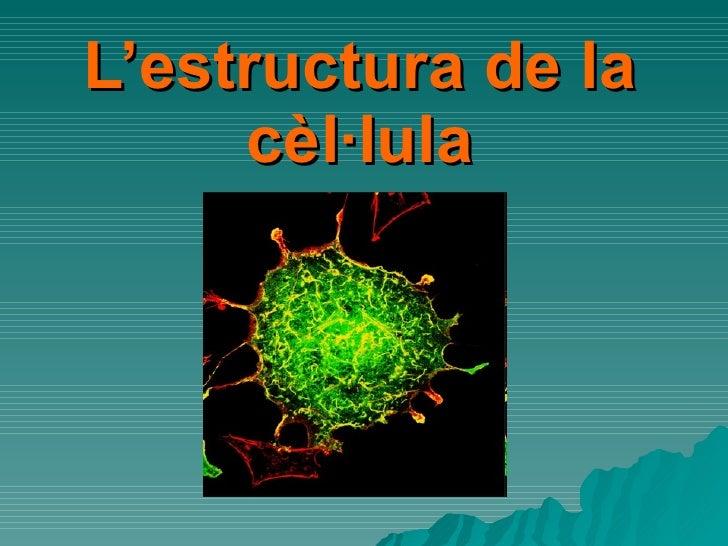 L'estructura de la cèl·lula