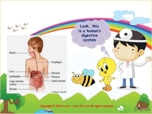 Look, this is a human's digestive system Copyright © 2014 Author: Suad AlFuraih All rights reserved