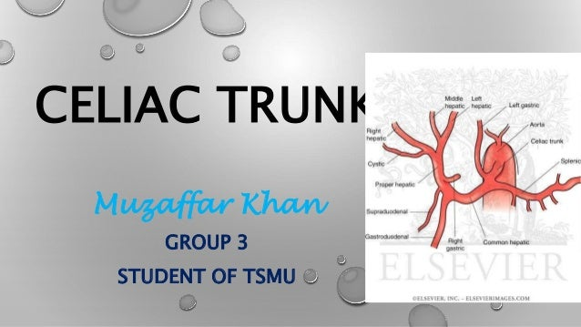 CELIAC TRUNK Muzaffar Khan GROUP 3 STUDENT OF TSMU
