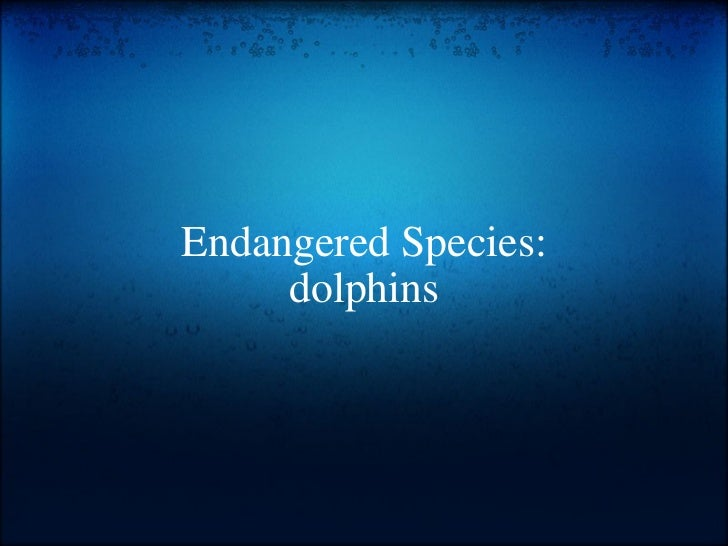 Endangered Species: dolphins