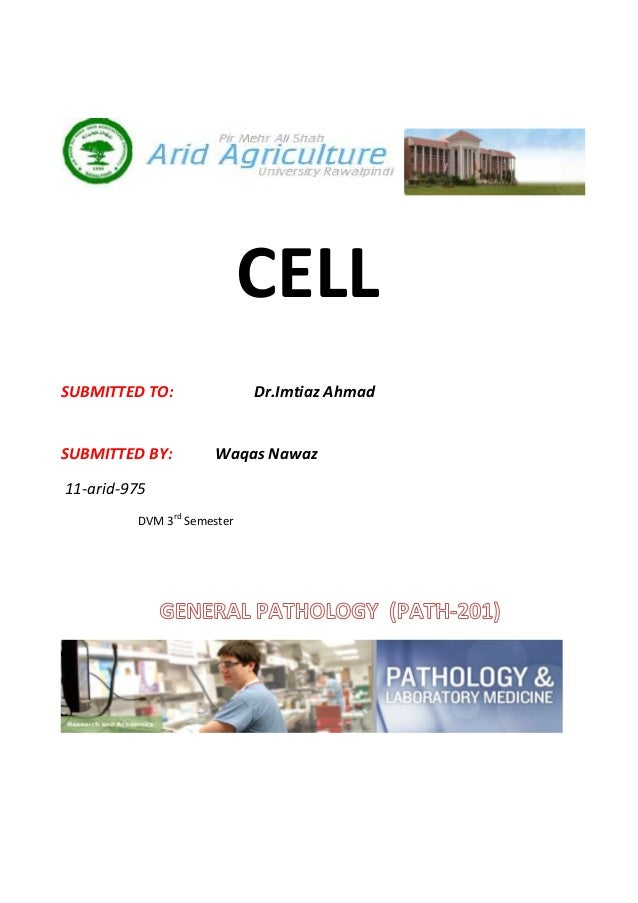 CELLSUBMITTED TO:               Dr.Imtiaz AhmadSUBMITTED BY:        Waqas Nawaz11-arid-975         DVM 3rd Semester