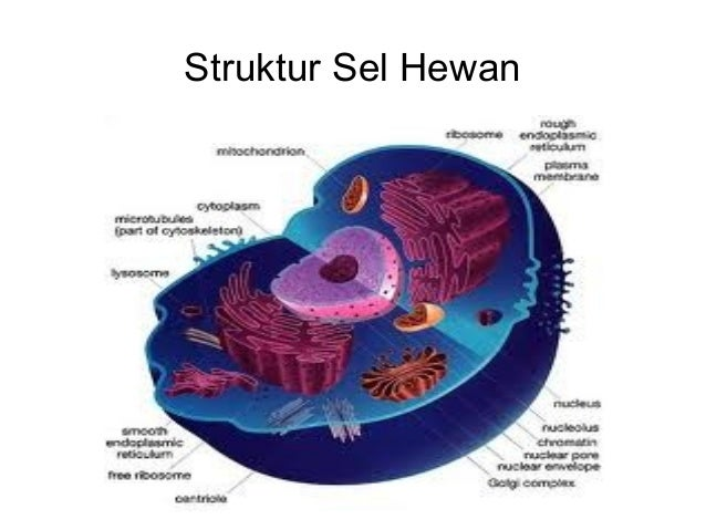 Eukaryotic Cell Diagram With Vacuole Block And Schematic Diagrams