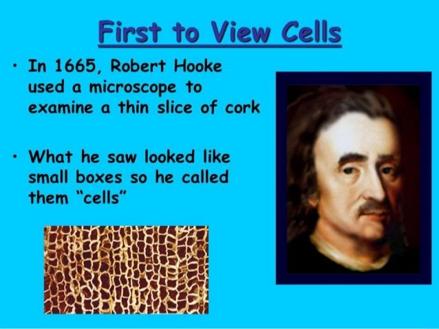 Why did Robert Hooke use the term