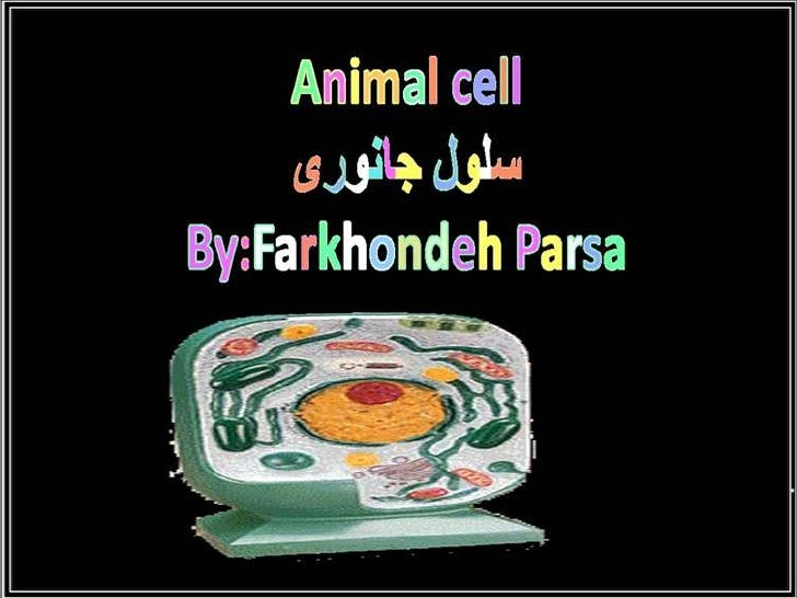 animals Cell