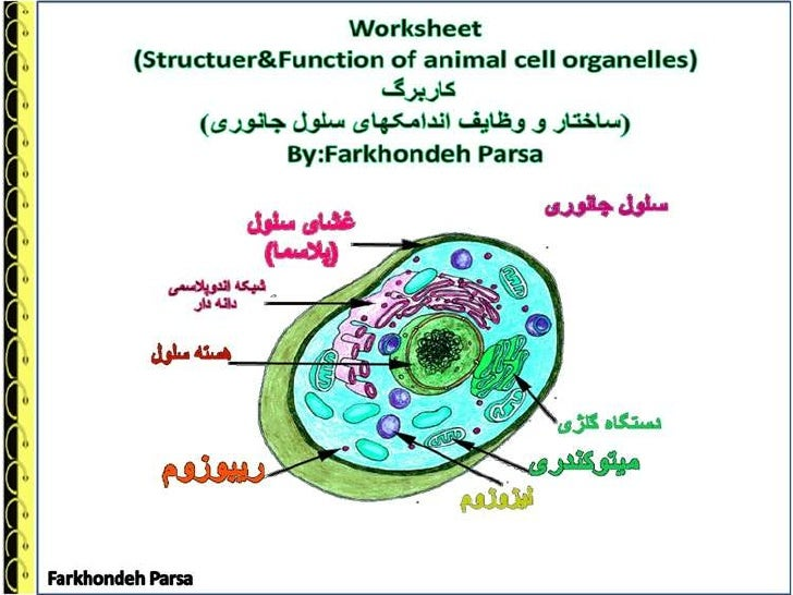 worksheet-structer function  of anial cell organelles