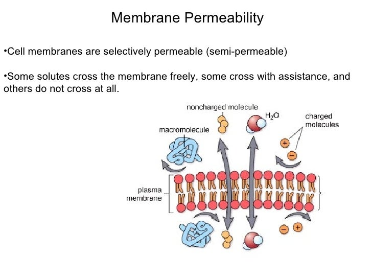cell transport mechanism permeability hypothesis The cell: transport mechanisms and cell permeability – wet lab objectives 1   work with members of your group to formulate a hypothesis about the rates of.