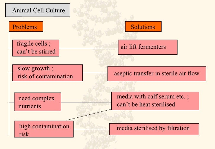animal cell culture Atcc® animal cell culture guide tips and techniques for continuous cell lines the essentials of l ife s cience resea r ch globally delivered.