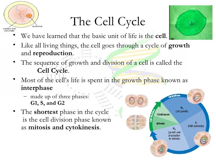 Protein synthesis explanation