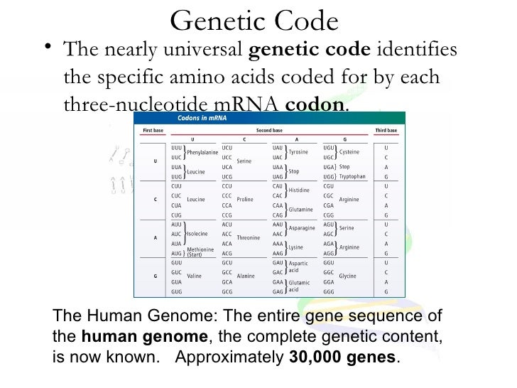paper notes on genetic code Advertisements: quick notes on genetic code:- 1 introduction to genetic code 2 properties of genetic code 3 exceptions 4 decipherence introduction to genetic code: living things depend on proteins for exis tence, the latter produce enzymes necessary for all chemical reactions structural.