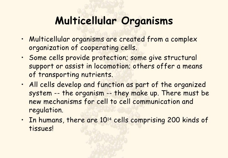 Multicellular Organisms <ul><li>Multicellular organisms are created from a complex organization of cooperating cells.  </l...