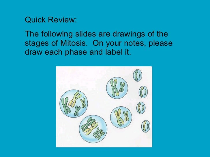 Quick Review: The following slides are drawings of the stages of Mitosis.  On your notes, please draw each phase and label...
