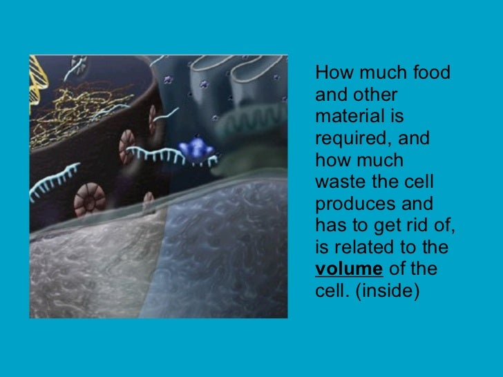 How much food and other material is required, and how much waste the cell produces and has to get rid of, is related to th...