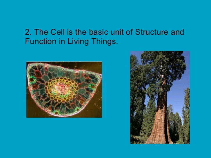 why are living organisms so diverse biology essay Protein functions are so diverse because  each of the twenty common amino acids plays a vital role in the structure and function of proteins in all living organisms.