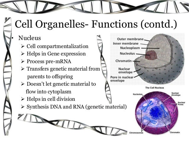 Cell  It U2019s Structure And Functions