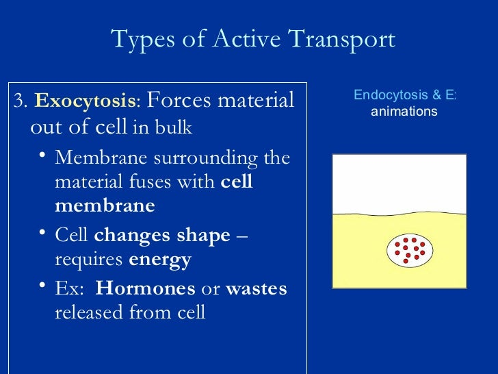 report cell transport Cellular processes: energy and communication 2 investigation 4 diffusion and osmosis carried by transport proteins the simplest form of movement is diffusion.