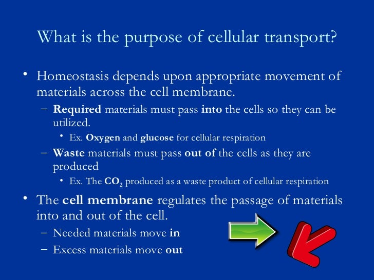 Cell Membrane And Cell Transport Notes New