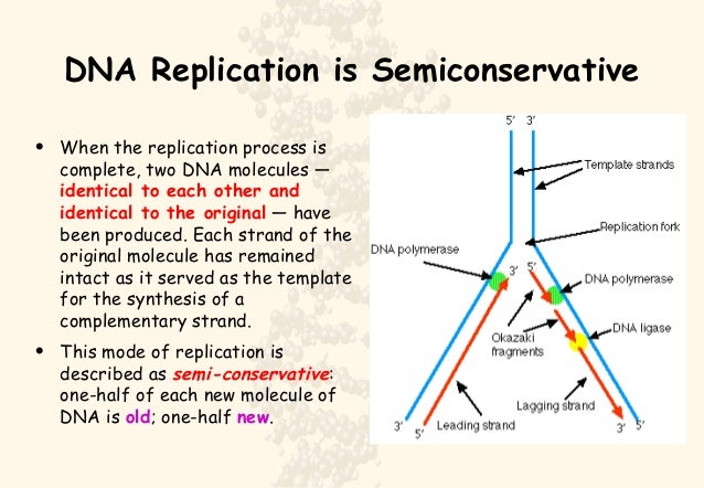 ap biology essay biotechnology Biotechnology: restriction enzyme ap biology investigation 9: restriction enzyme analysis.
