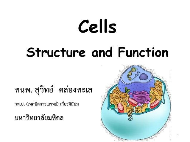 Cells Structure and Function ทนพ. สุวิทย์ คล่องทะเล วท.บ. (เทคนิคการแพทย์) เกียรตินิยม มหาวิทยาลัยมหิดล 1
