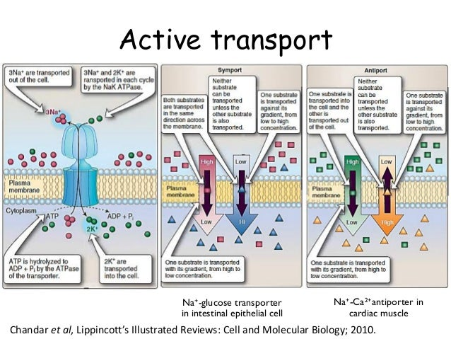 Cell : Structure and Function Part 01
