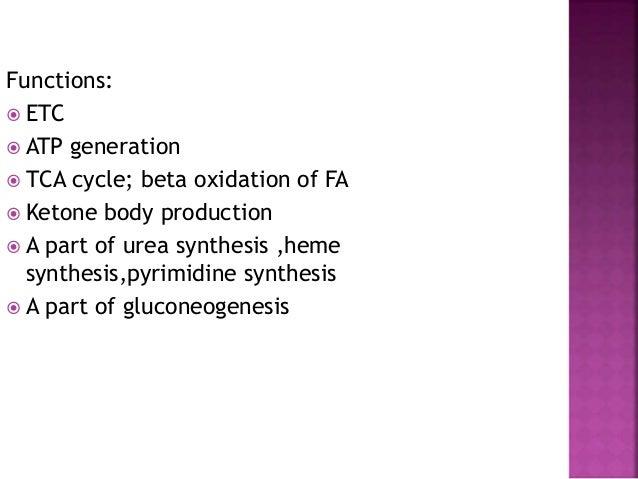  Mitochondria-inner membrane:ATP synthase  Lysosome-cathepsin  Golgi complex-galactosyl transferase  Microsomes-glucos...