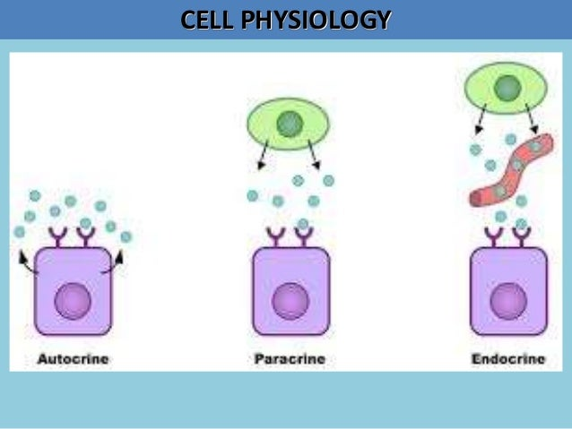 Basim Zwain Lectures - Cell Physiology-2 Slide 3