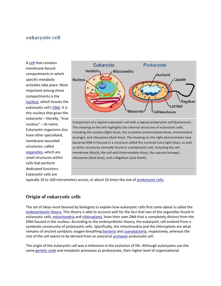 eukaryotic cellA cell that containsmembrane-boundcompartments in whichspecific metabolicactivities take place. Mostimporta...