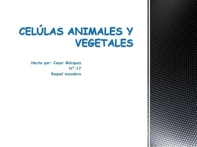 Hecho por: Cesar Márquez N°:17 Raquel escudero CELÚLAS ANIMALES Y VEGETALES
