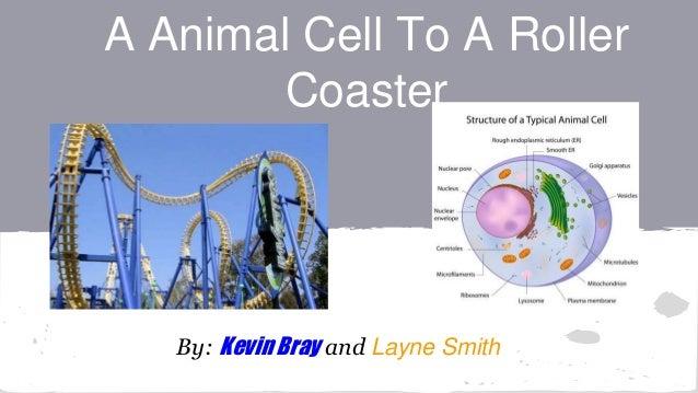 Cell As A Roller Coaster