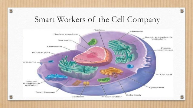Cell Anatomy