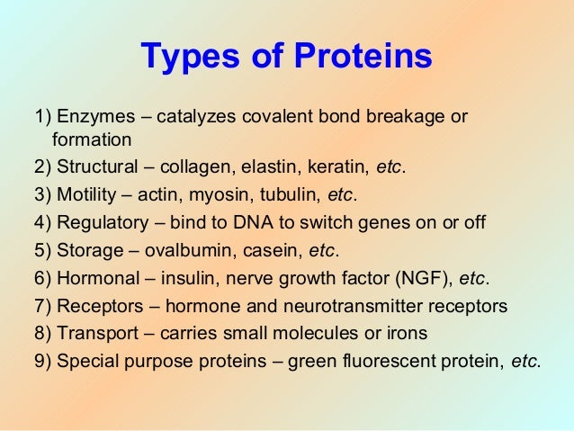ribosomes structure and function essay